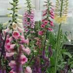 RSF Plant Finder