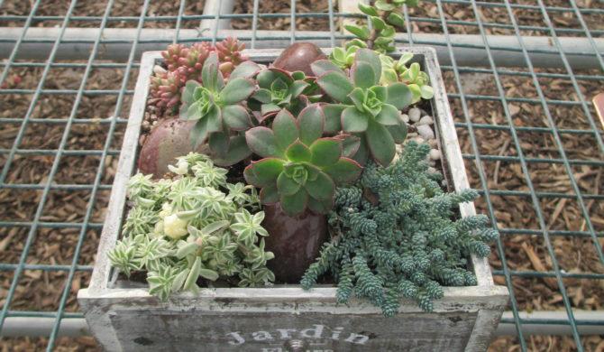 RSF Succulent Garden Workshop