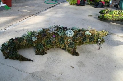 Alligator__plant_497619d9ccef7.jpg
