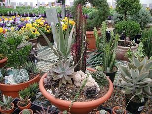 Cactusgardenx.JPG