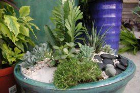 Succulent_Garden_4978c6366ef61.jpg