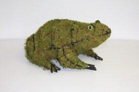 frogmoss-700.jpg