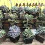 Succulent Special