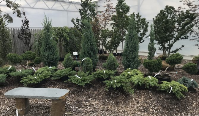 Trees & Shrubs on Sale