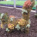 Topiary Animal Workshop