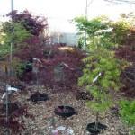 Trees & Shrubs on Sale