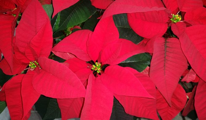 Holiday Season Nov 29-Dec 24
