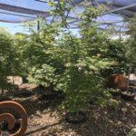 Perennials, Trees & Shrubs 30% off