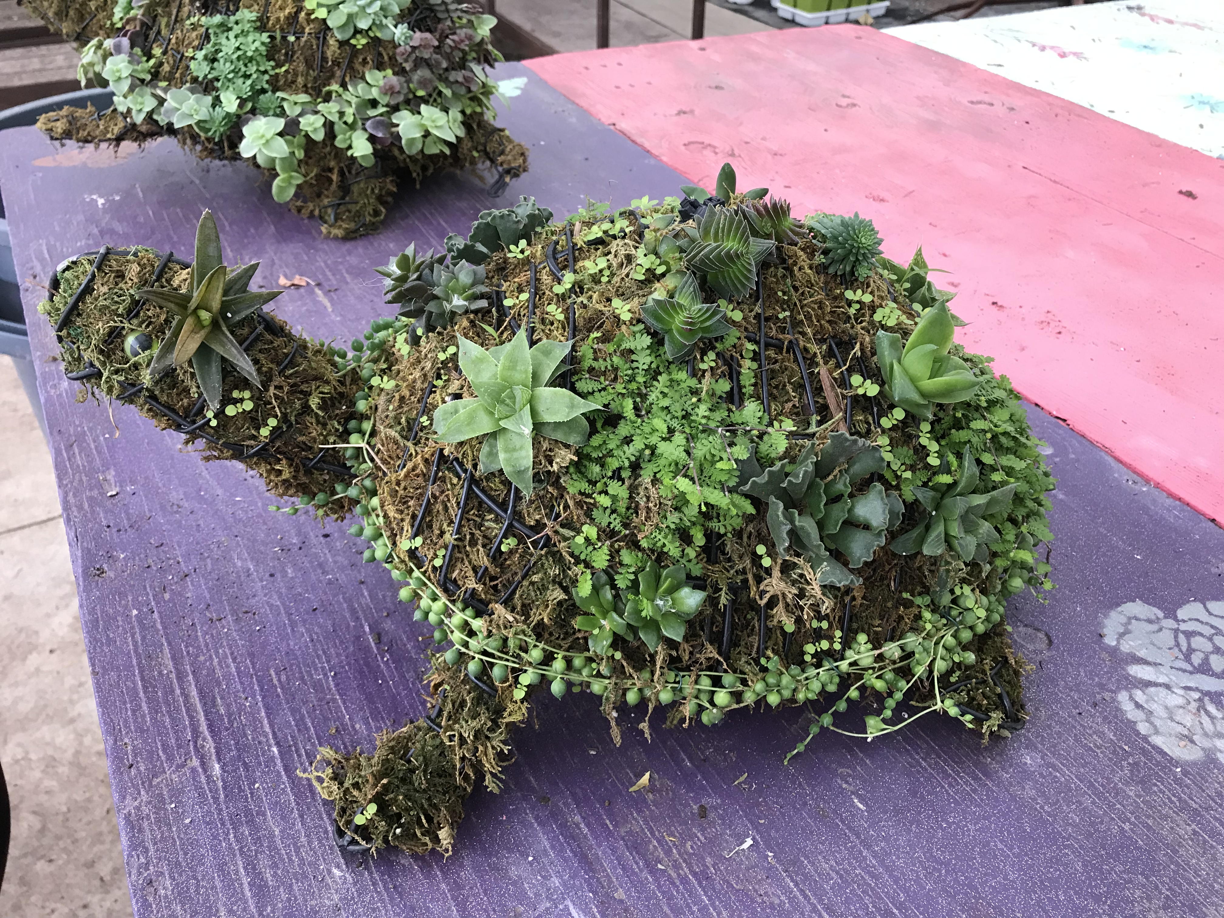 Animal Topiary How To River Street Flowerland